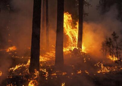 加拿大阿尔伯塔省发生野火 提醒大家注意安全